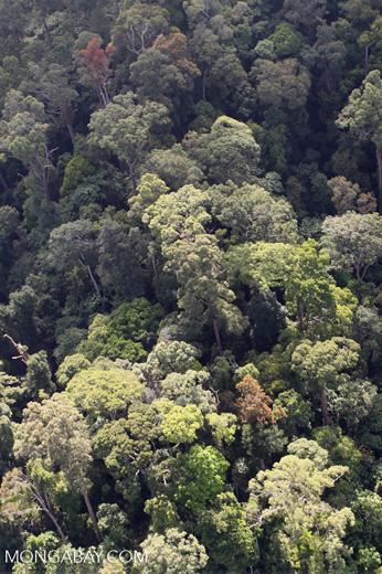 Borneo rainforest -- sabah_0963