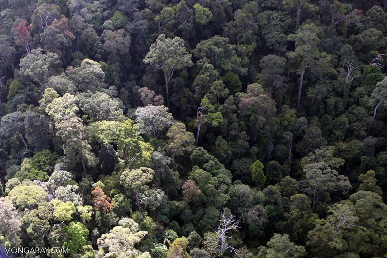 Borneo rainforest -- sabah_0964