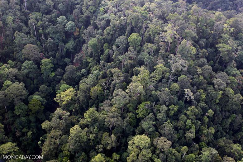 Borneo rainforest -- sabah_0968