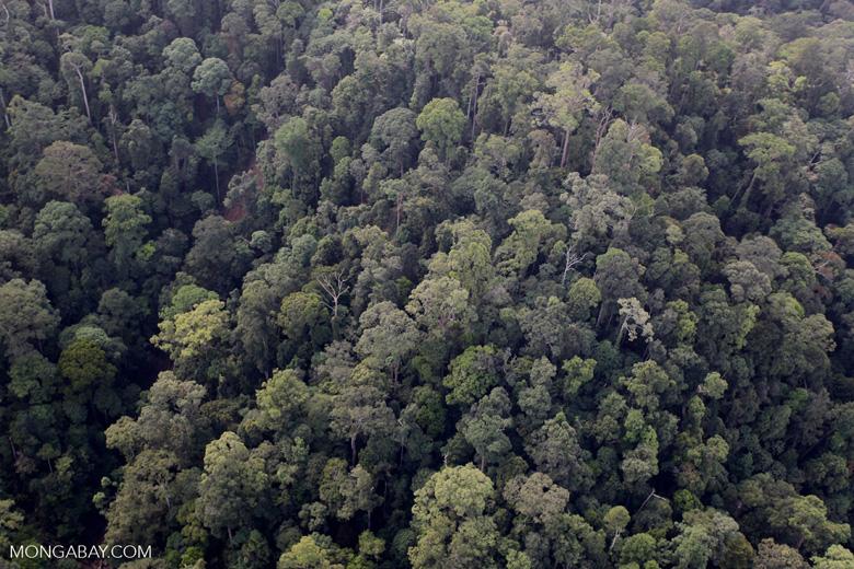 Borneo rainforest -- sabah_0969