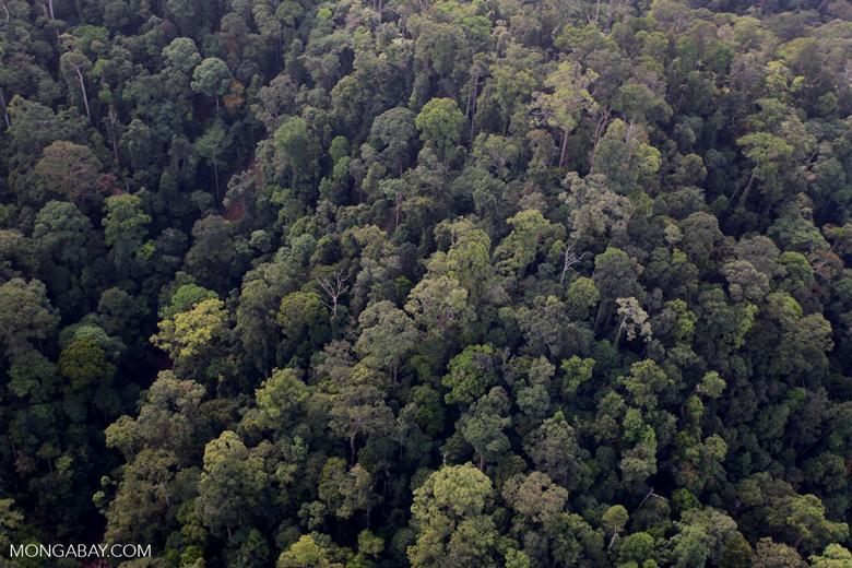Borneo rainforest -- sabah_0970