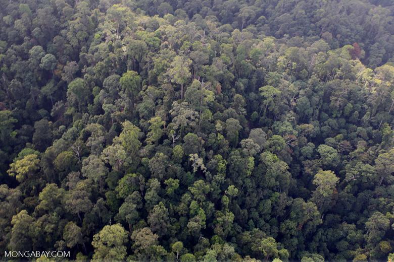 Borneo rainforest -- sabah_0971