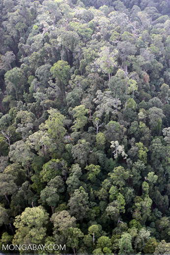 Borneo rainforest -- sabah_0972