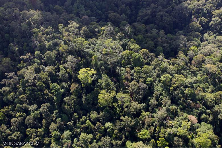 Borneo rainforest -- sabah_0976