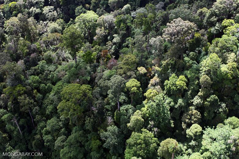 Borneo rainforest -- sabah_0985