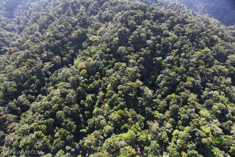 Borneo rainforest -- sabah_0999
