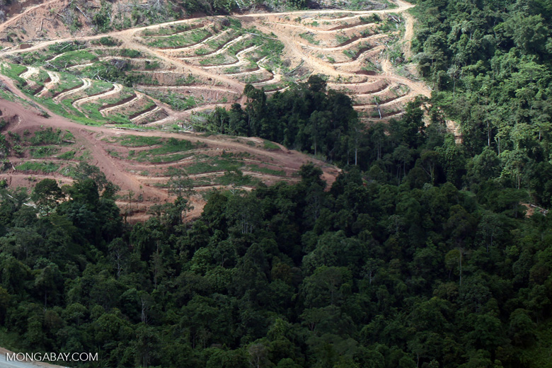 Deforestation for oil palm -- sabah_1063