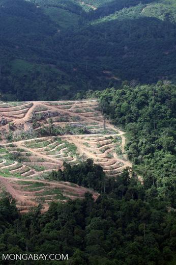 Deforestation for oil palm -- sabah_1065