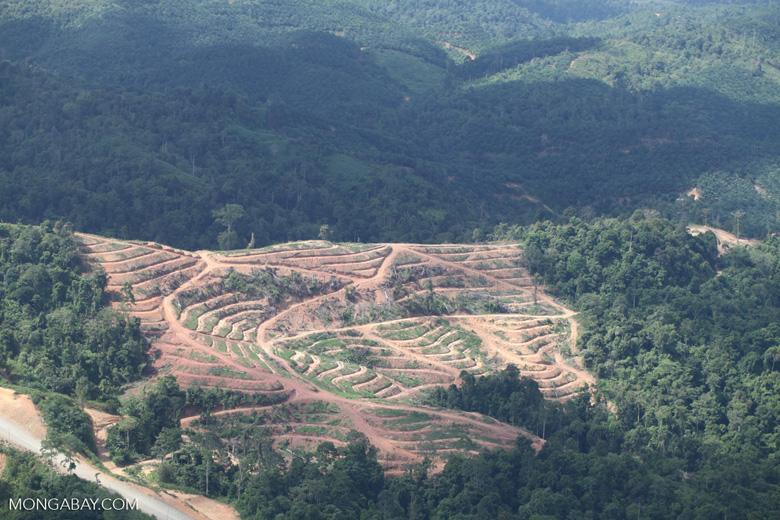 Deforestation for oil palm -- sabah_1067