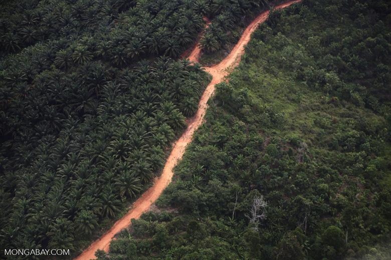 Oil palm plantation -- sabah_1078