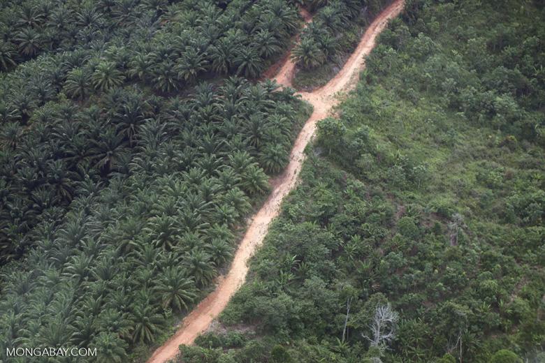 Oil palm plantation -- sabah_1079