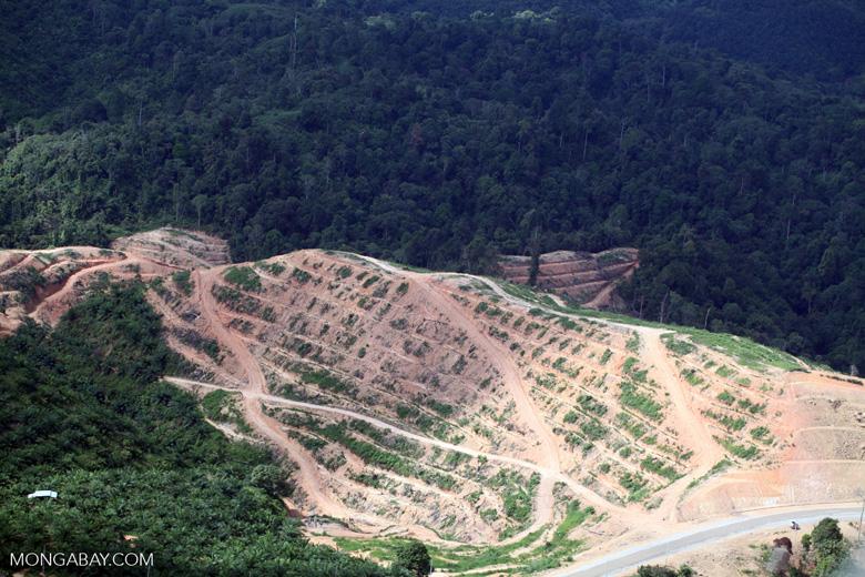 Deforestation for oil palm -- sabah_1085
