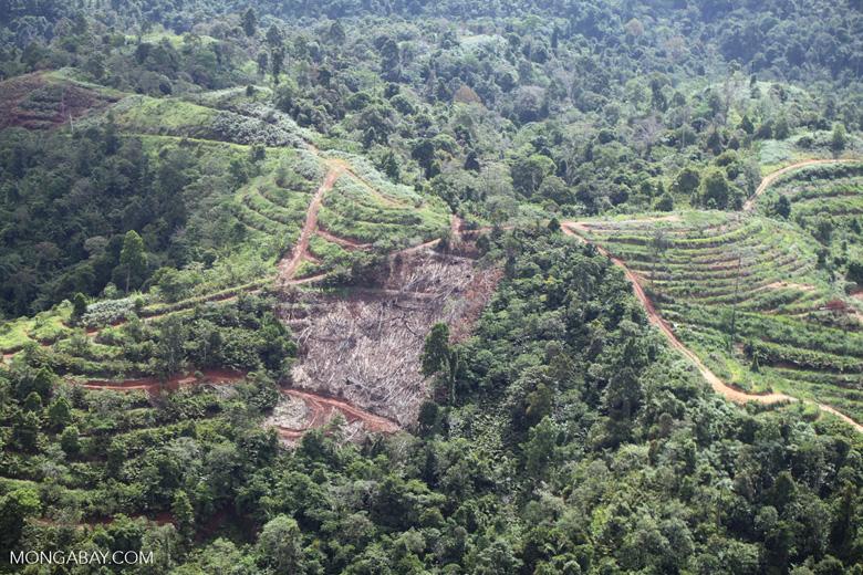 Deforestation for oil palm -- sabah_1092