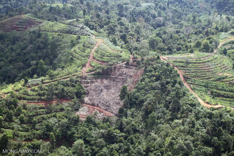Deforestation for oil palm -- sabah_1093