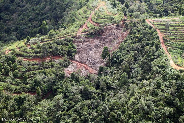 Deforestation for oil palm -- sabah_1094