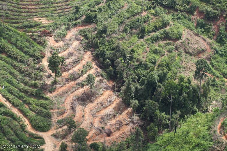 Deforestation for oil palm -- sabah_1097