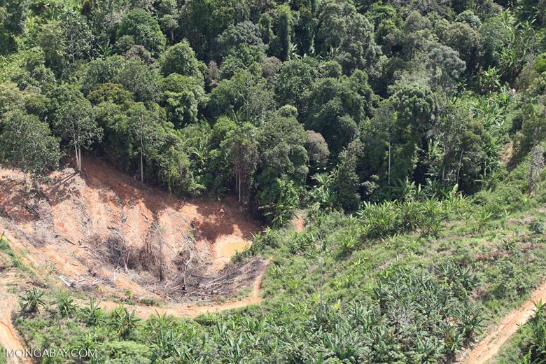 Deforestation for oil palm -- sabah_1103