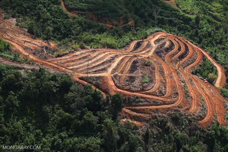 Deforestation for oil palm -- sabah_1105