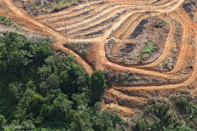 Deforestation for oil palm -- sabah_1110
