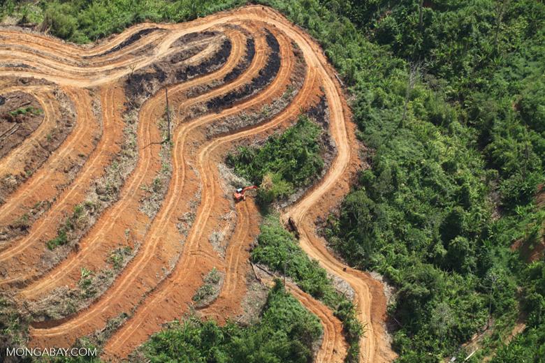 Deforestation for oil palm -- sabah_1116
