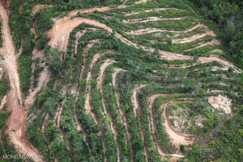 Deforestation for oil palm -- sabah_1117