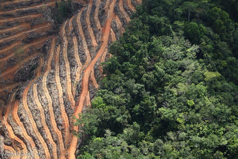 Deforestation for oil palm -- sabah_1143