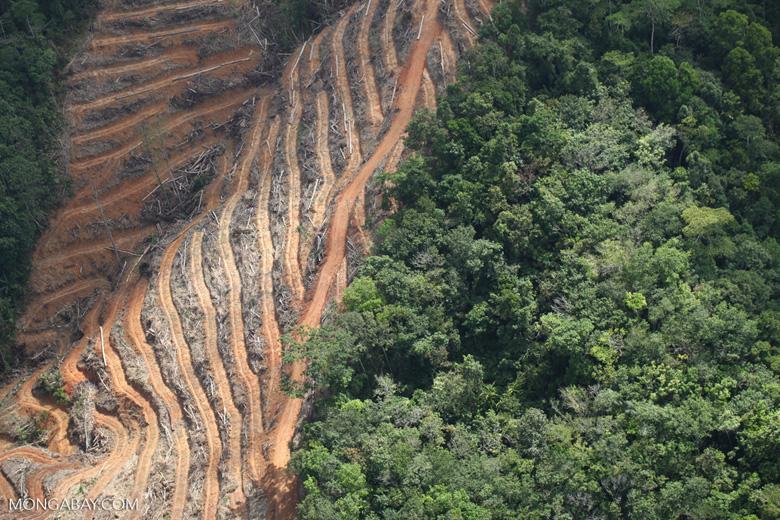 Deforestation for oil palm -- sabah_1145