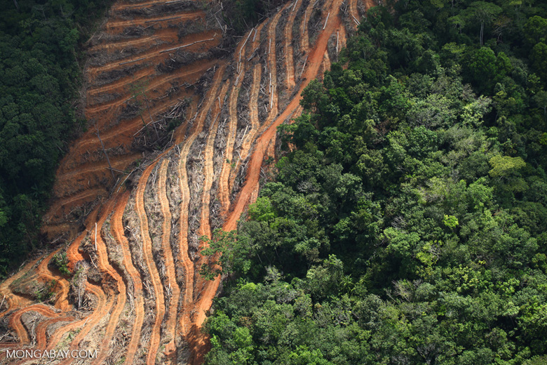 Deforestation for oil palm -- sabah_1148