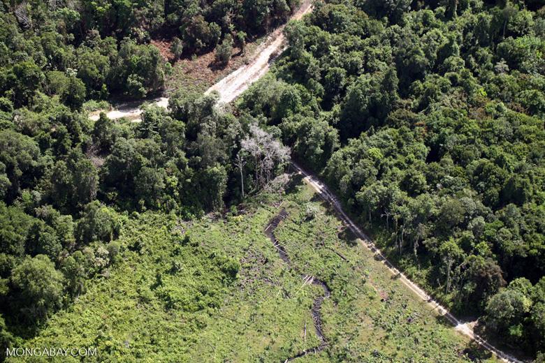 Deforestation for oil palm -- sabah_1150