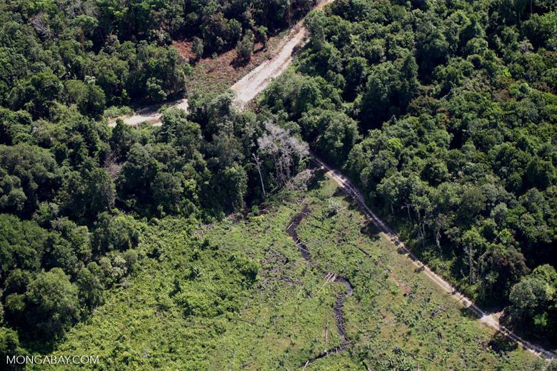 Deforestation for oil palm -- sabah_1151