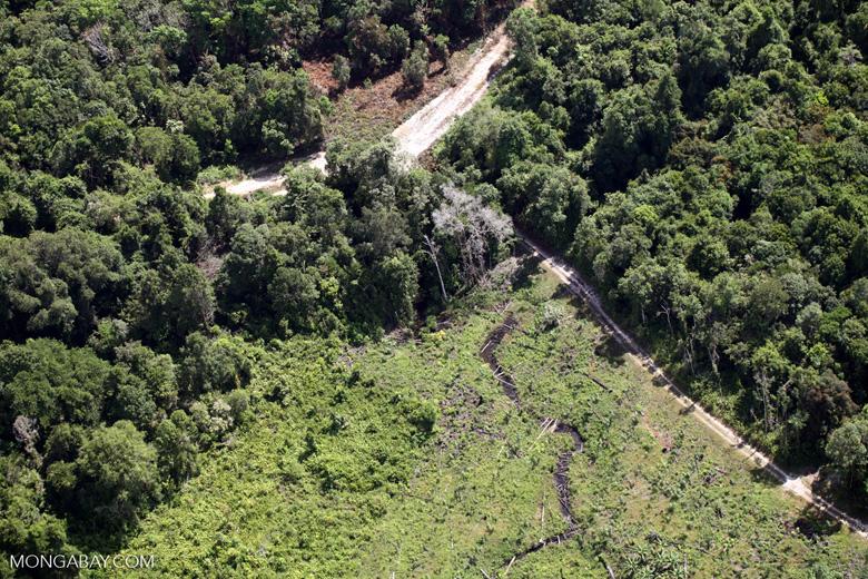 Deforestation for oil palm -- sabah_1152
