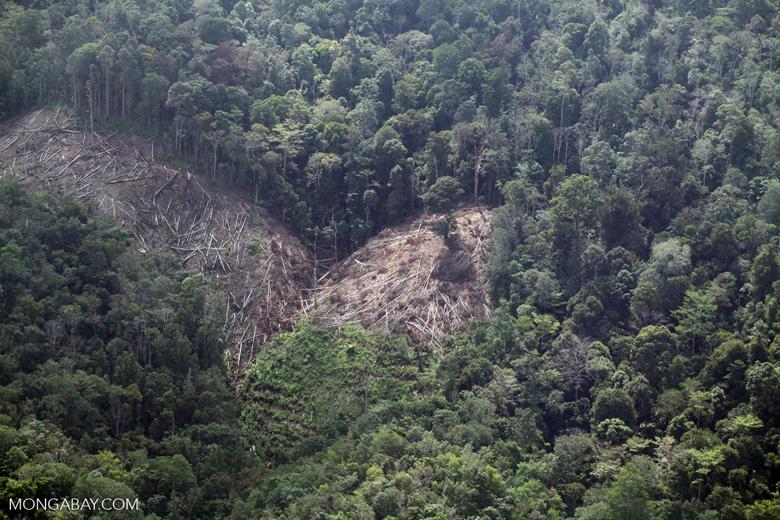 Deforestation for oil palm -- sabah_1186