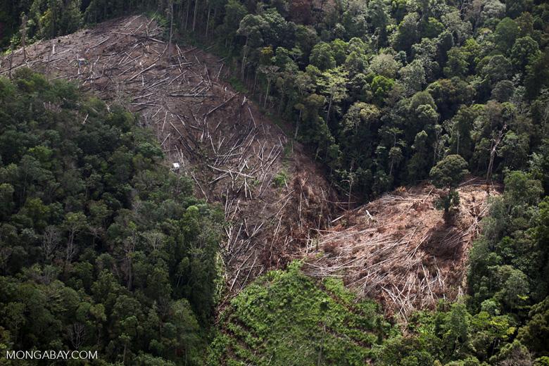 Deforestation for oil palm -- sabah_1190