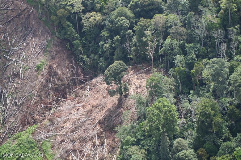 Deforestation for oil palm -- sabah_1197