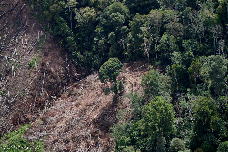 Deforestation for oil palm -- sabah_1198