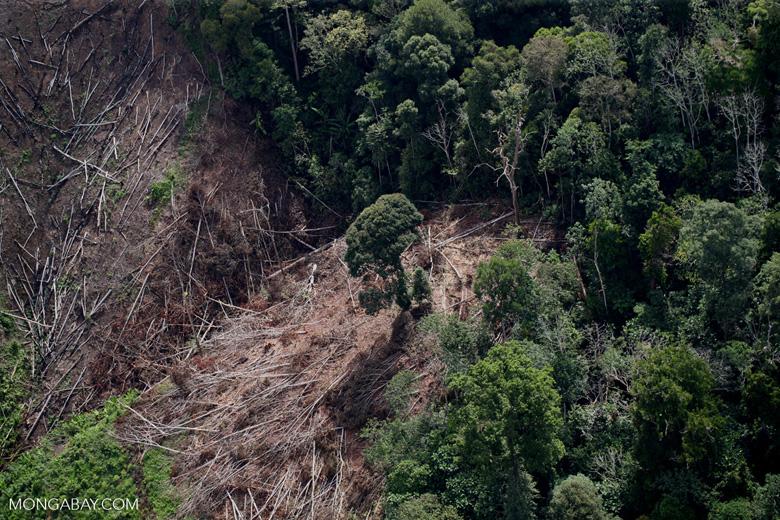 Deforestation for oil palm -- sabah_1200