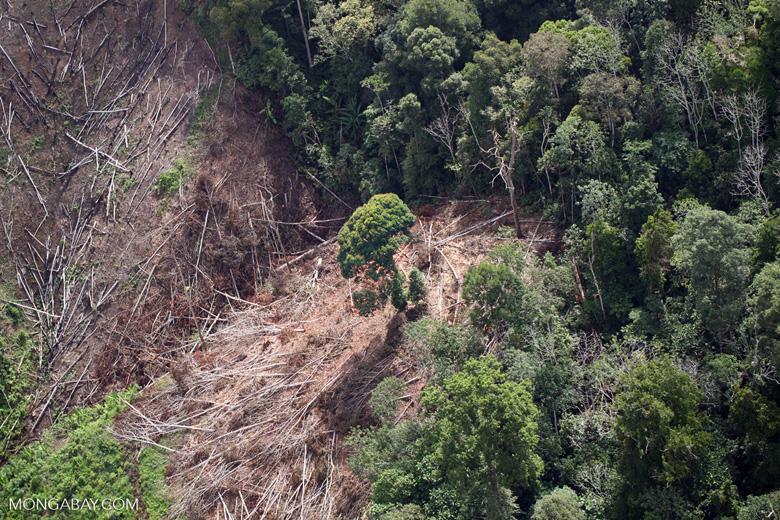 Deforestation for oil palm -- sabah_1201