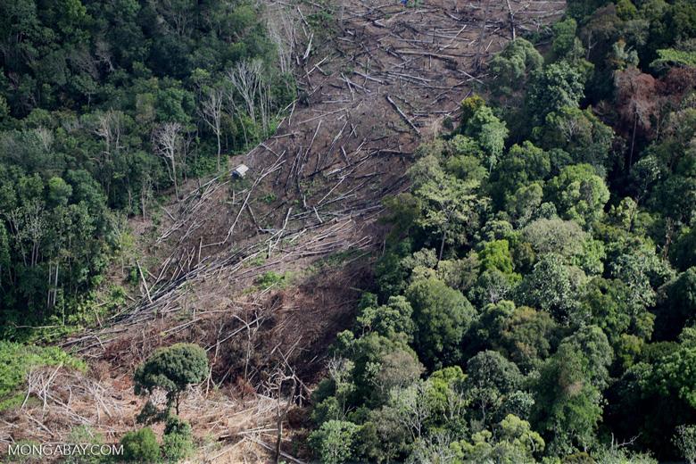 Deforestation for oil palm -- sabah_1205