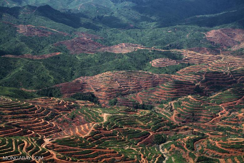 Deforestation for oil palm -- sabah_1209