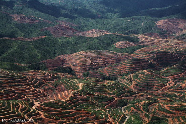 Deforestation for oil palm -- sabah_1212