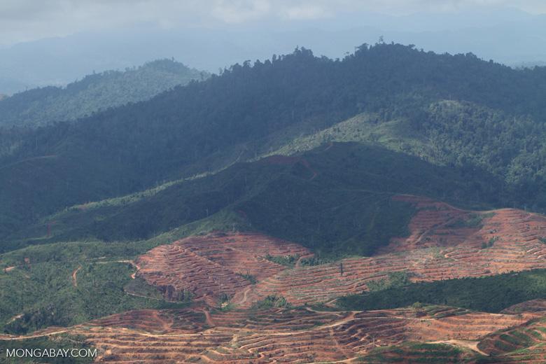 Deforestation for oil palm -- sabah_1214