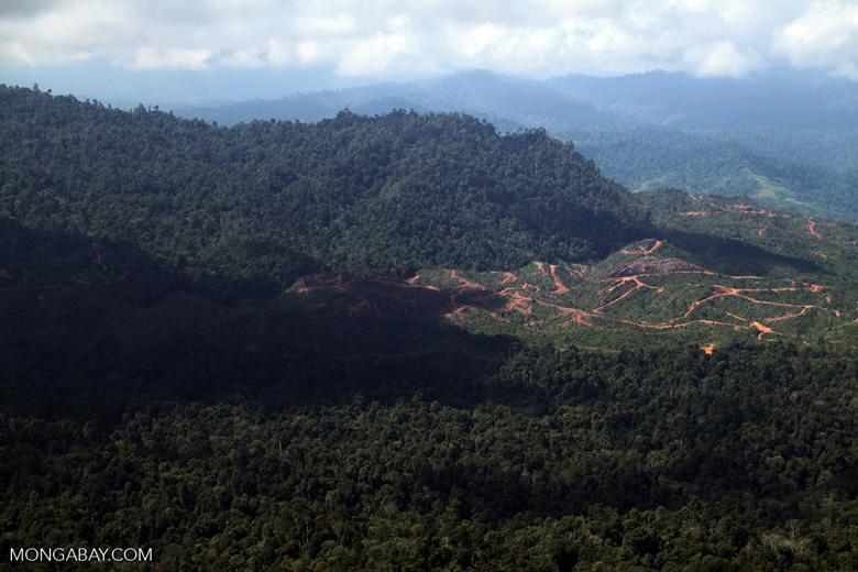 Deforestation for oil palm -- sabah_1219