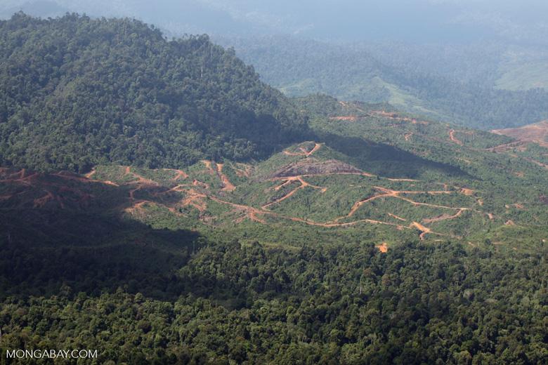 Deforestation for oil palm -- sabah_1222