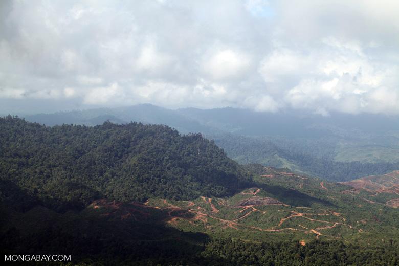 Deforestation for oil palm -- sabah_1223