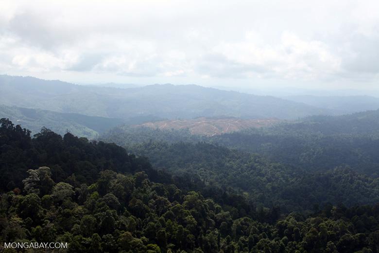 Deforestation for oil palm -- sabah_1224