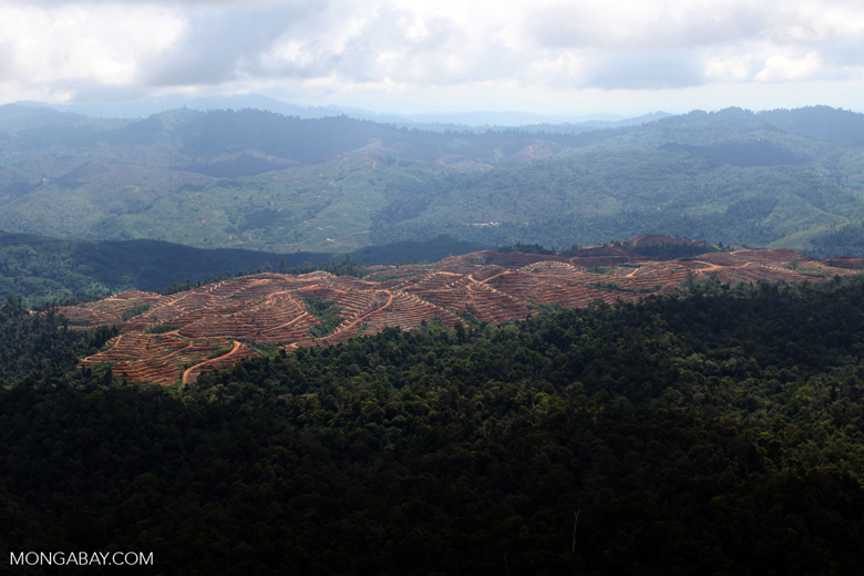 Deforestation for oil palm -- sabah_1227