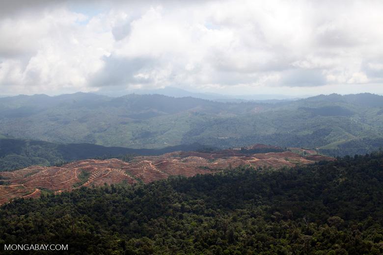 Deforestation for oil palm -- sabah_1232