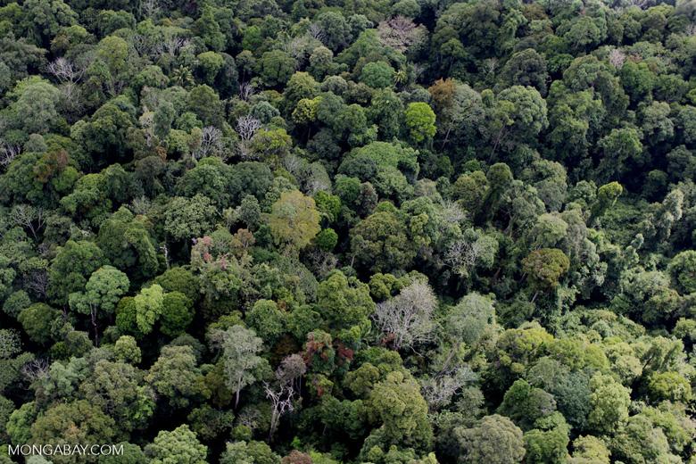 Borneo rainforest -- sabah_1236