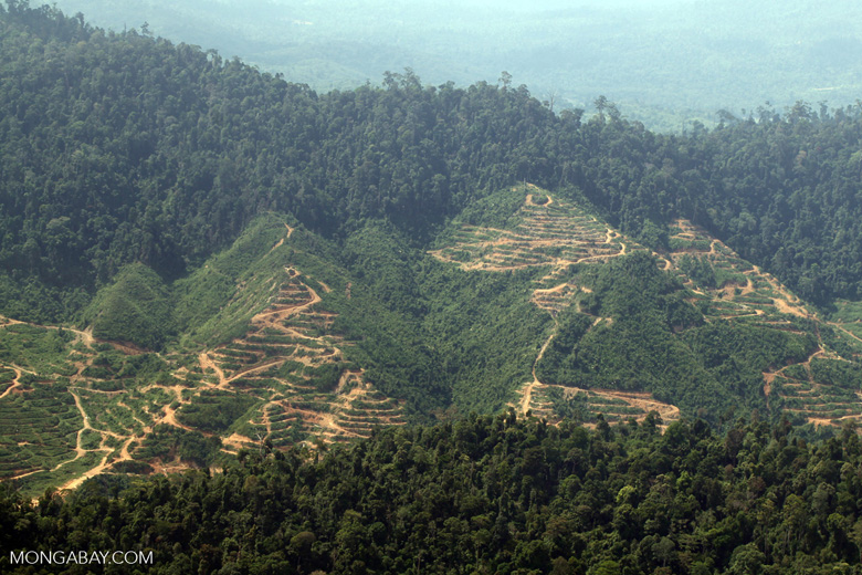 Deforestation for oil palm -- sabah_1245
