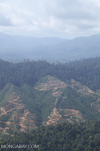 Deforestation for oil palm -- sabah_1252